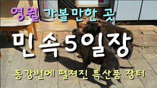 #영월가볼만한곳 #영월민속5일장 삽살이 팔자 주인 만나…