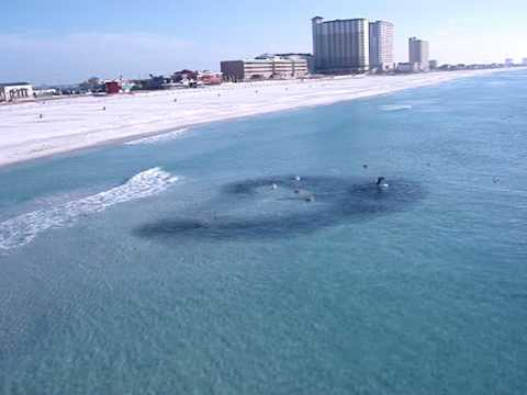 Menhaden pensacola pier 11 29 07 youtube for Panama city beach pier fishing report