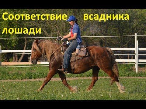 Соответствие уровня всадника уровню лошади
