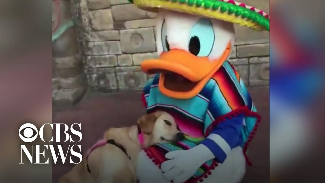 25 Best Memes About Donald Duck Angry Donald Duck Angry Memes