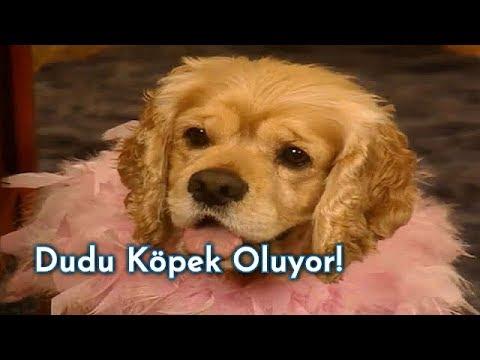 Perihan, Dudu'yu Köpeğe Çeviriyor! - Sihirli Annem