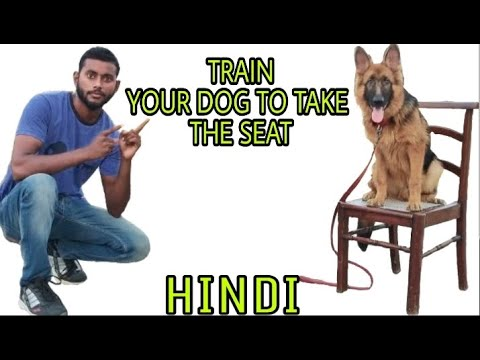 Train Your Dog 🐶 How to Sit On The chair 🐕🐕