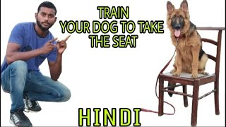 Train Your Dog 🐶 How to Sit On The Seat 🐕🐕🐕