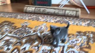 1 месячный котенок первый день дома без мамки