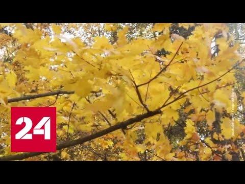 Сентябрь побил мировой температурный рекорд - Россия 24