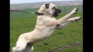 Türkiyenin en meşhur 5 köpeği