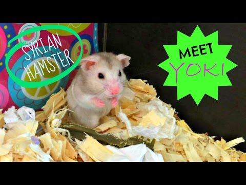 Hamster Safe Chocolate Cake Recipe