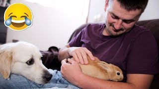 My Funny Dog is Jealous of Me When I Pet Cute Rabbit