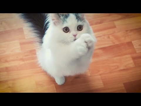 Smart Kitten Learns Cute Tricks!