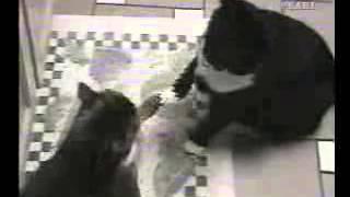 Коты выясняют отношения(Коты очень прикольно выясняют отношения друг с другом Смешные ролики про животных!!! Подписывайтесь: http://www...., 2015-03-15T15:31:11.000Z)