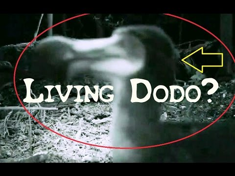 Living Dodo is not alive!