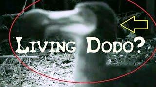Living Dodo is not alive!