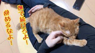 撫でるのを辞めると尻尾で猛抗議するかわいい子猫! thumbnail