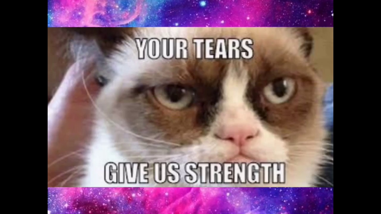 Funniest Grumpy Cat Memes Clean Youtube