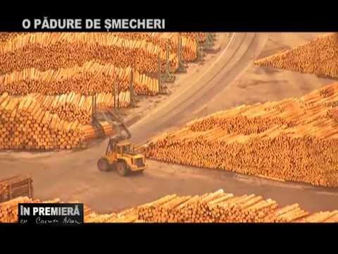 In Premiera: O PĂDURE DE ŞMECHERI