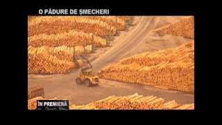 In Premiera O PADURE DE SMECHERI