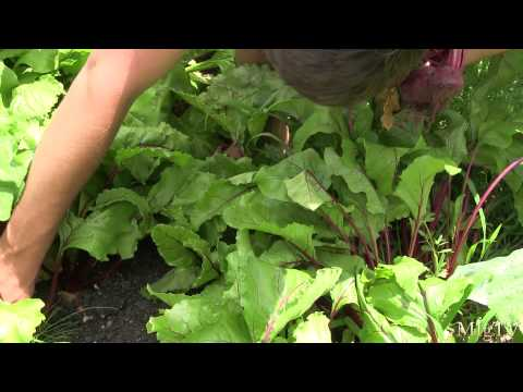 Organic Vegetable Harvest of Epic Proportions