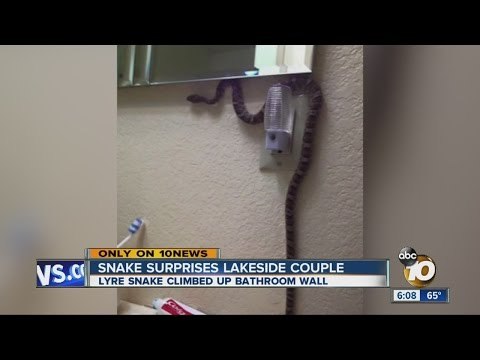 Snake surprises Lakeside couple in bathroom