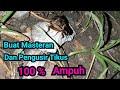 Suara Jangkrik Jalibang Di Alam Liar Buat Masteran Burung Pengusir Tikus  Mp3 - Mp4 Download