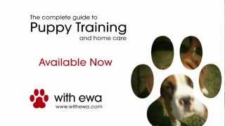 Puppy Training Video, The Complete Guide To Puppy Training And Home Care - With Ewa - Dog Training