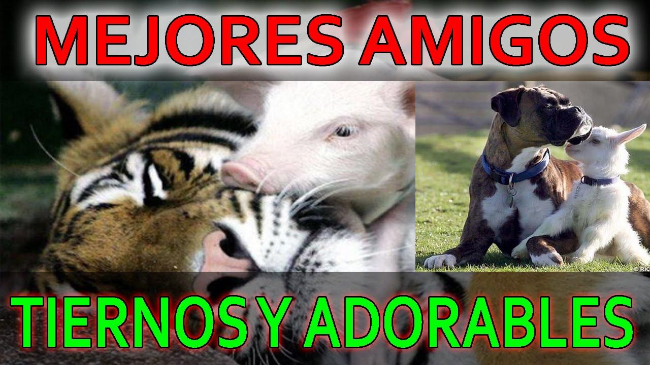 Animales Tiernos y adorables - Imagenes de animales - YouTube