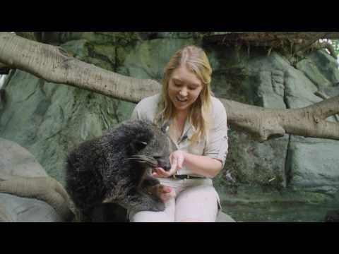 Learn about our amazing binturong!