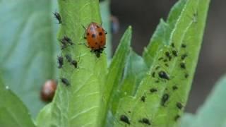 Control Garden Pests The Natural Way