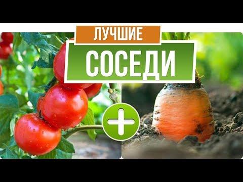 Правильный севооборот овощей ✔️ Как Соседство влияет на урожай 🍅   севооборот   садоводам   огороде   советы   овощей   гарден   даче   зоо   garden   от