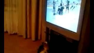 Котенок смотрит хоккей и сильно болеет за своих