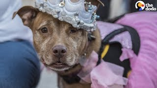Dogs Get 'Senior Prom' To Help Them Find Homes | The Dodo