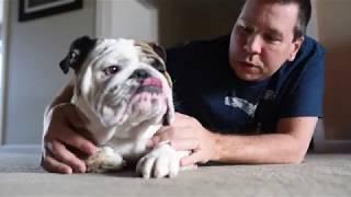 Reuben the Bulldog: A Few More Thoughts