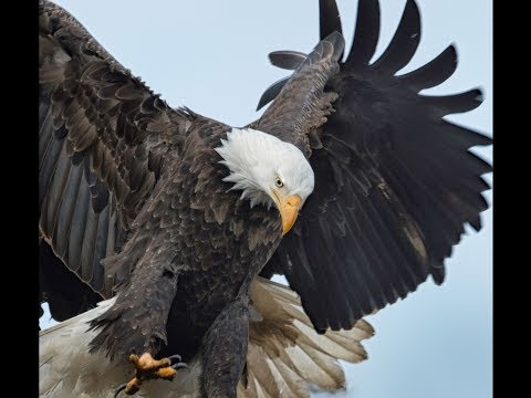 News of Eagle Nests - Berry College & Stewards Trio  + Amazing Surprise