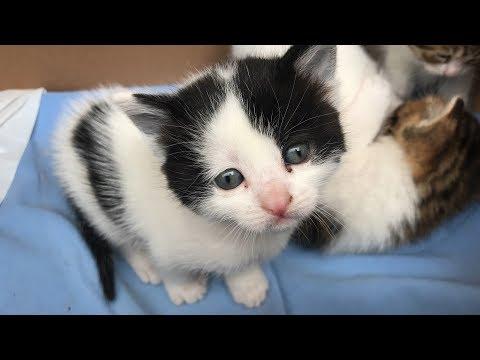 YAVRU KEDİ SESİ MİYAVLAMA VİDEOLARI   Kittens Meowing   BABY CAT SOUNDS   Little Kitten   Cat Videos