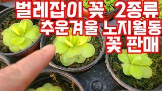 야생화 전원주택 정원 꾸미기 노지월동 베란다화초  가드…