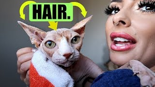 My hairless cat HAS HAIR.