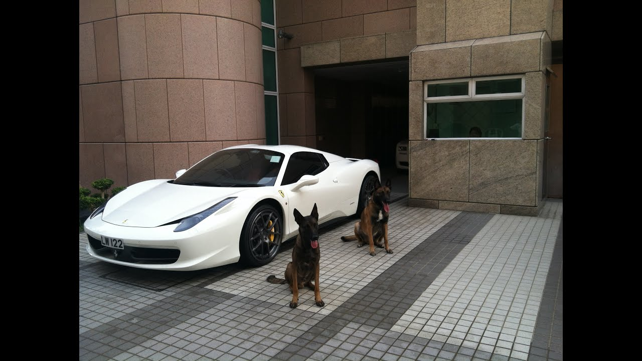 The Best Protection Trained Dogs Premier Protection Dogs