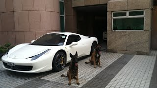 The best Protection Trained Dogs  Premier Protection Dogs Overview 2015