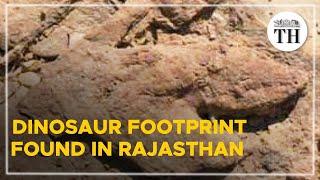 Dinosaur footprints found in Rajasthan