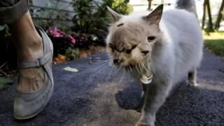 двухголовый кот Френк и Луи
