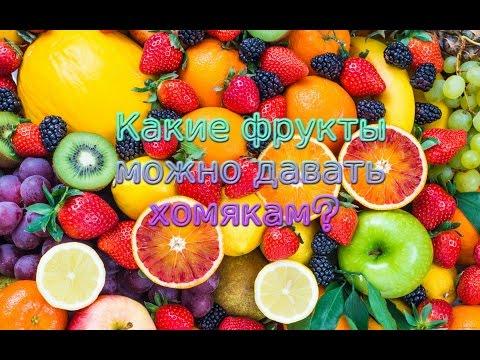 Какие фрукты можно давать хомяку?