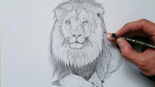 Cómo dibujar un león realista paso a paso