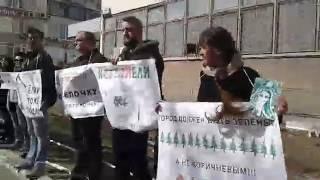 Десятки саратовцев вышли на пикет против вырубки елей в Мирном переулке