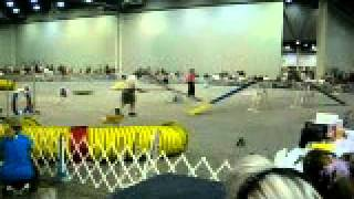 Agility Course At The 34th Annual Houston Reliant Park World Series Of Dog Shows