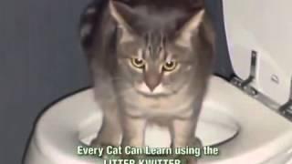 Приколы с животными как научить котов ходить на унитаз