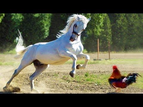 Приколы лошади