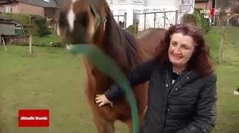 Fall Peter Pfister: WDR Aktuelle Stunde filmt bei uns wegen Tod eines Pferdes | Leichlingen