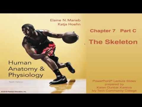 Anatomy and Physiology Chapter 7 Part C Lecture: The Skelton