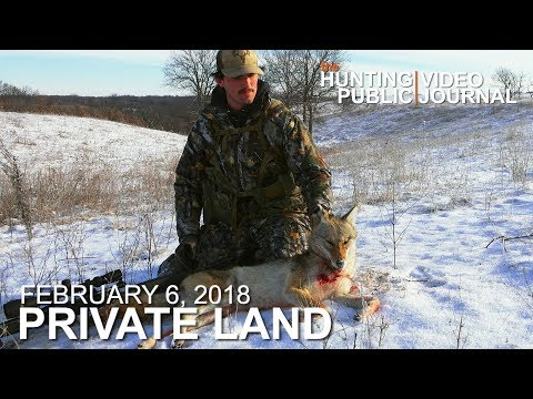 Coyote Calling Success | The Hunting Public