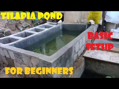New Backyard Tilapia Pond