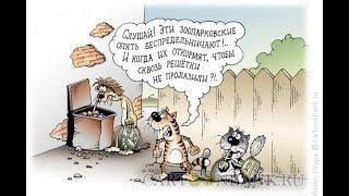 Ржачный Анекдот. Про Животных, Посмешней, Смешные Анекдоты
